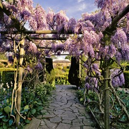 Spring Pergola Gallery Group