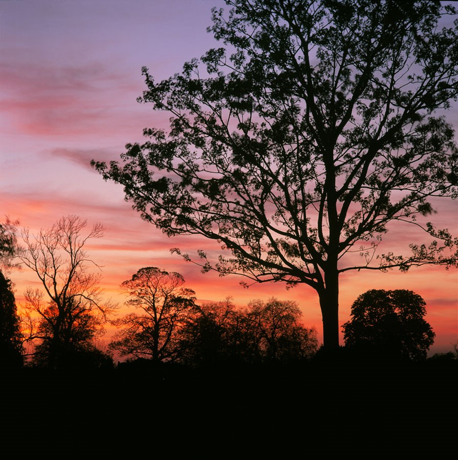 Tree Silhouettes and Spring Sunset, 2009.  Print Status: printed.  To order a print please contact info@maxarush.com