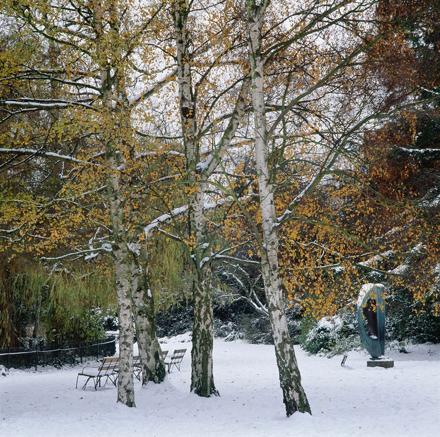 Birches In Snow With Divided Circle, 2010. Print Status: prints in preparation. To order a print please contact info@maxarush.com