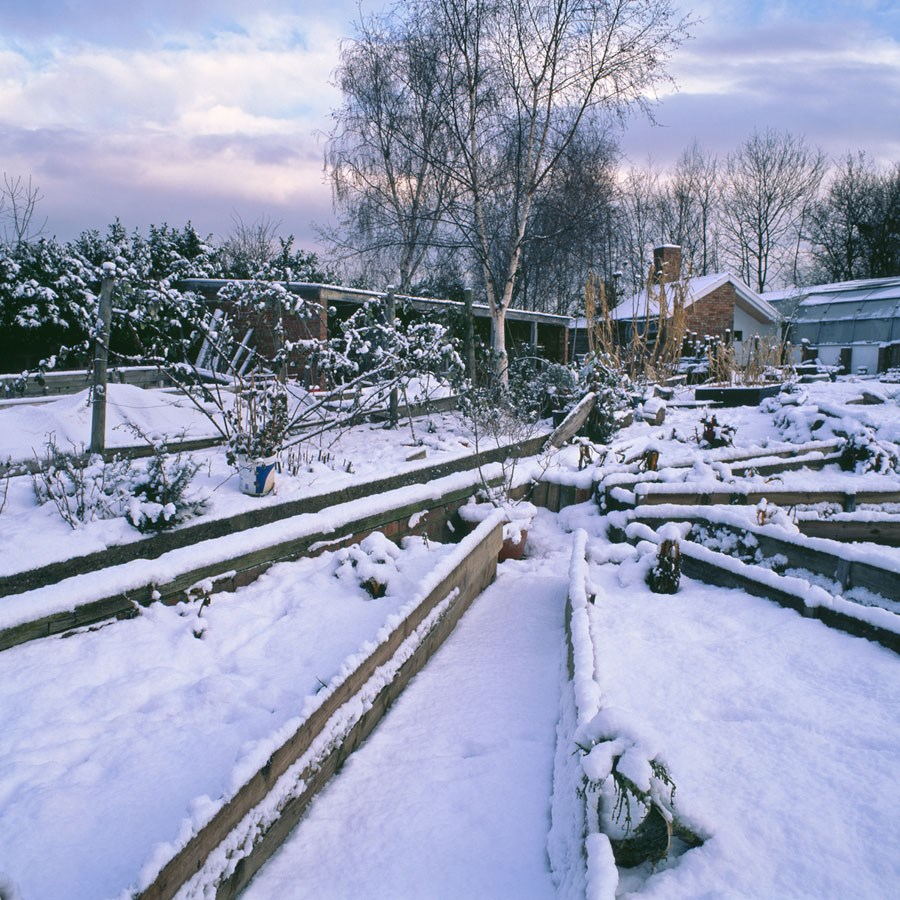 Kitchen Garden Winter Scene, 2010. Print Status: printed and in stock.  To order a print please contact info@maxarush.com