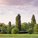 Poplars with Distant Gherkin, 2010. Print Status: printed and in stock.  To order a print please contact info@maxarush.com