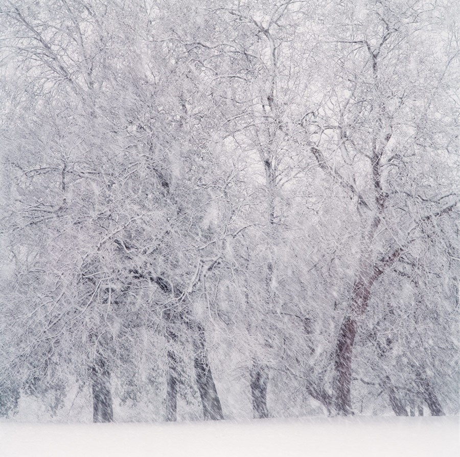 Treeline and Snow Flurry, 2008. Print Status: printed and in stock.  To order a print please contact info@maxarush.com