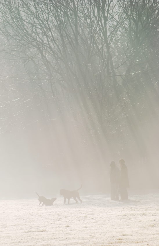 Dogs Playing in the Frosty Sunbeams, 2007. Print Status: not yet printed.  To order a print please contact info@maxarush.com