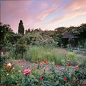 June Roses and Evening Sky, 2010. Print Status: prints in preparation.  To order a print please contact info@maxarush.com