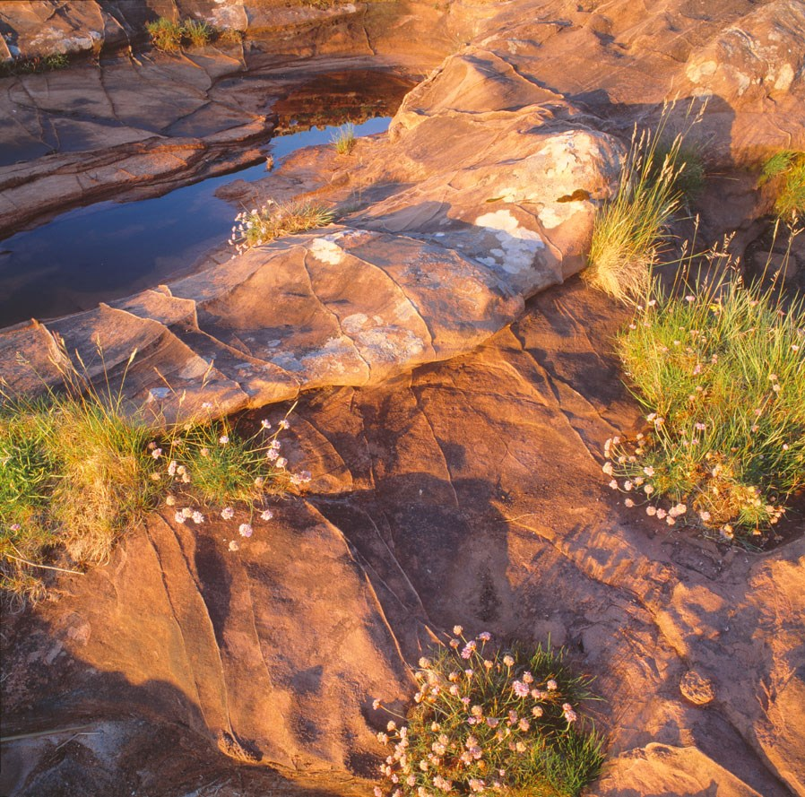 Thrift And Sandstone Shore