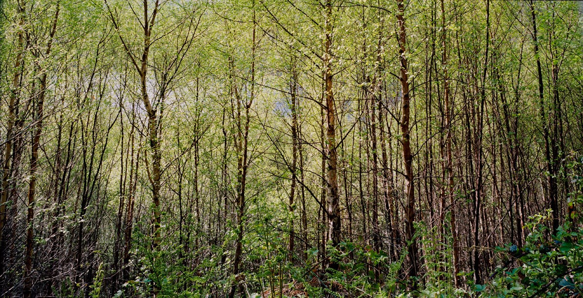 Miniature Forest, Garreg Ddu, 2013. Print Status: not yet printed. To order a print please contact info@maxarush.com