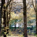 Patches of Yellow, Garreg Ddu, 2013. Print Status: not yet printed. To order a print please contact info@maxarush.com