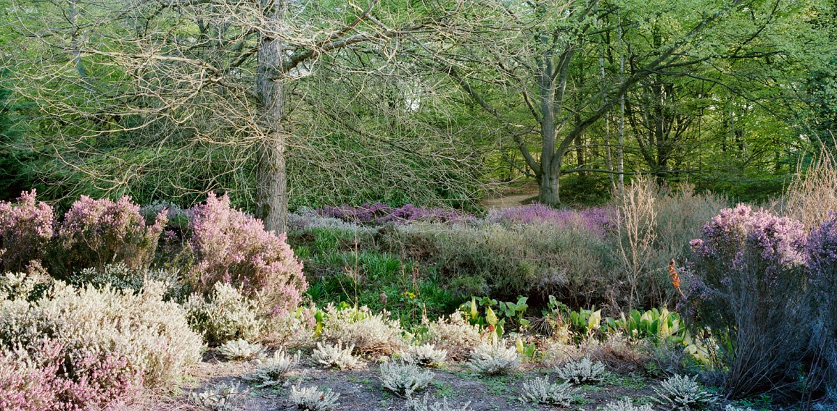 Heather Beds, May, 2013. (Isabella Plantation)