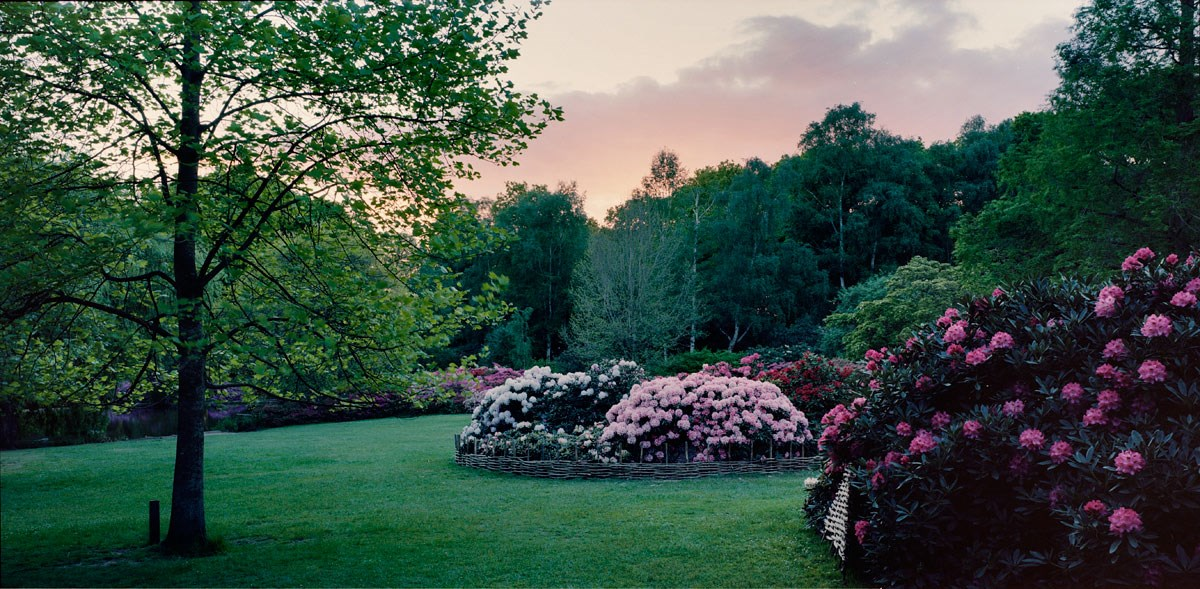 Sunset over Thompson's Pond, 2013 (Isabella Plantation)