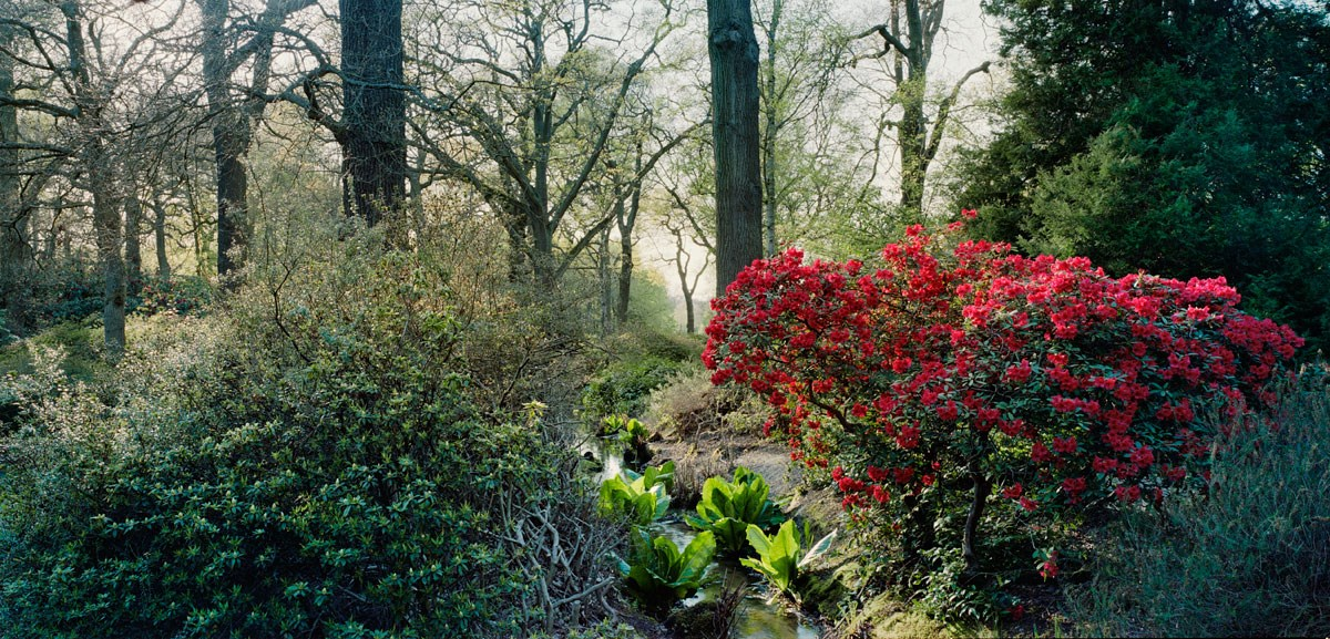 View down the Stream, Early Spring, 2013 (Isabella Plantation)