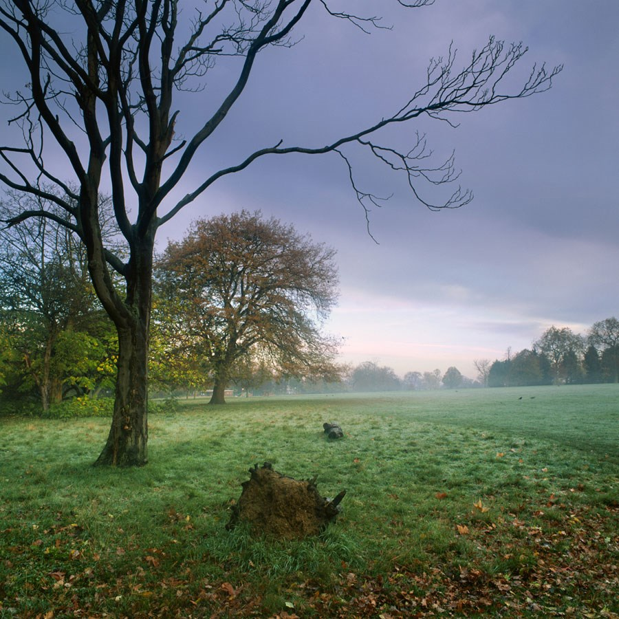 "Bare Branches and Morning Mist, 2010. Framed Print, 14.5"" sq in 50cm sq black aluminium frame. £125 + Mounted, 12"" sq in 40cm sq mount, £45"