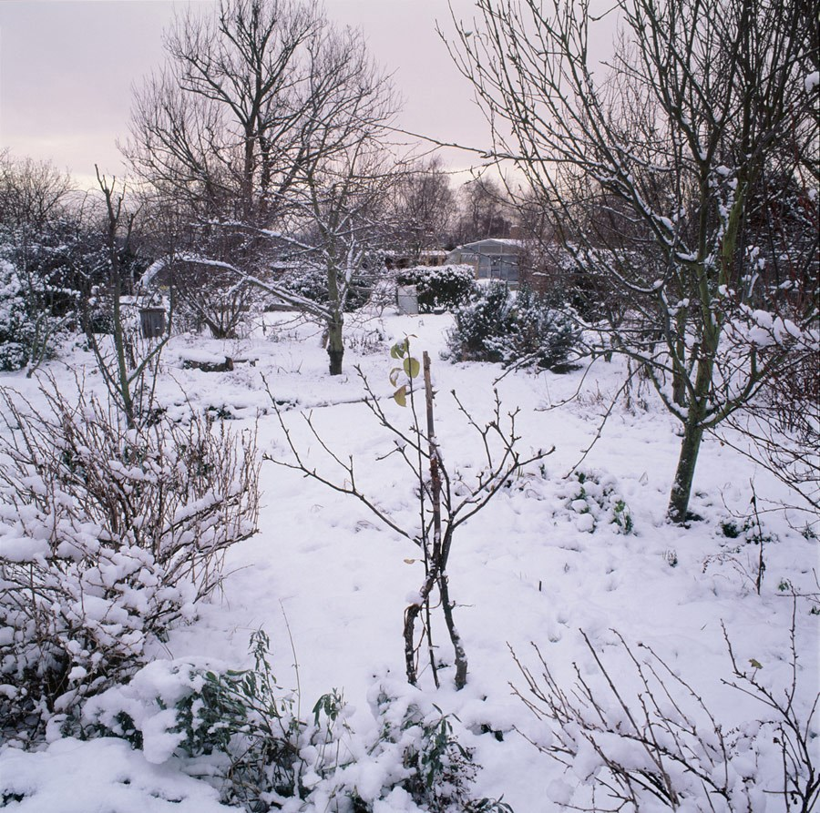 "Winter in the Orchard And Forest Garden, 2010. Framed Print, 14.5"" sq in 50cm sq black aluminium frame. £125"