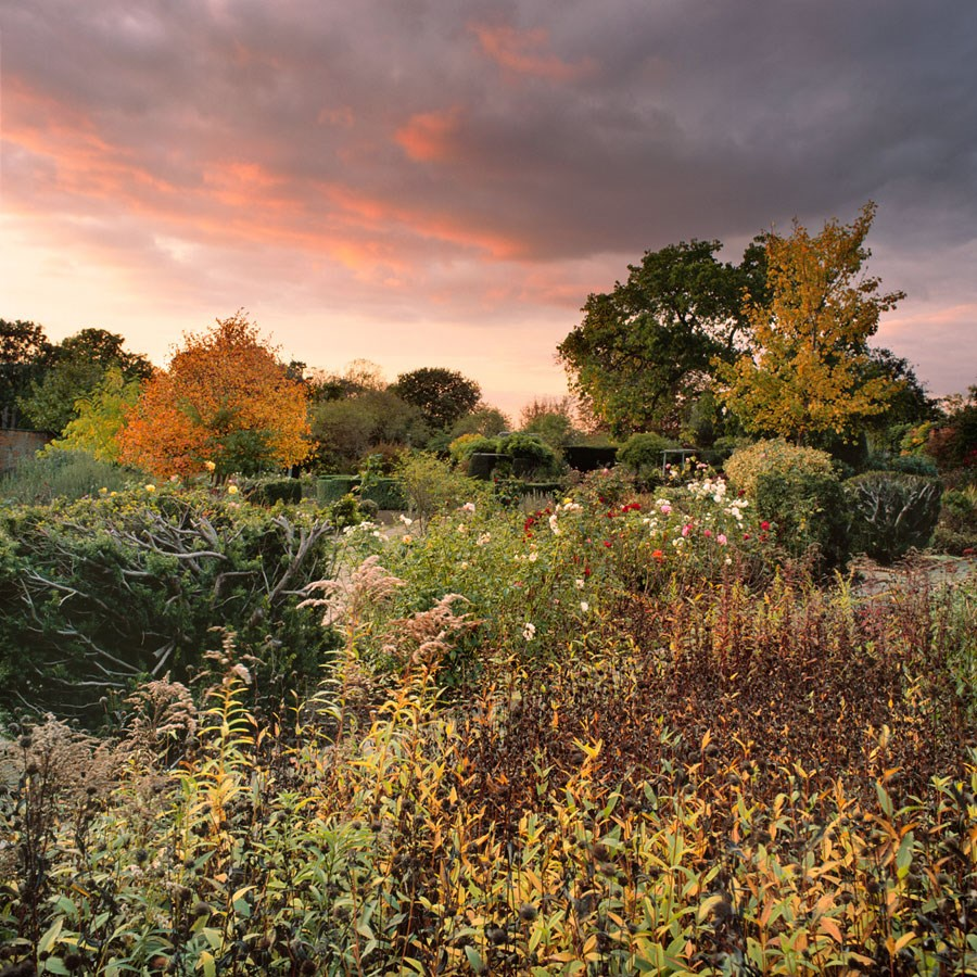 "Autumn Beauty of the Walled Garden, 2009. Framed Print, 14.5"" sq in 50cm sq black aluminium frame. £125"