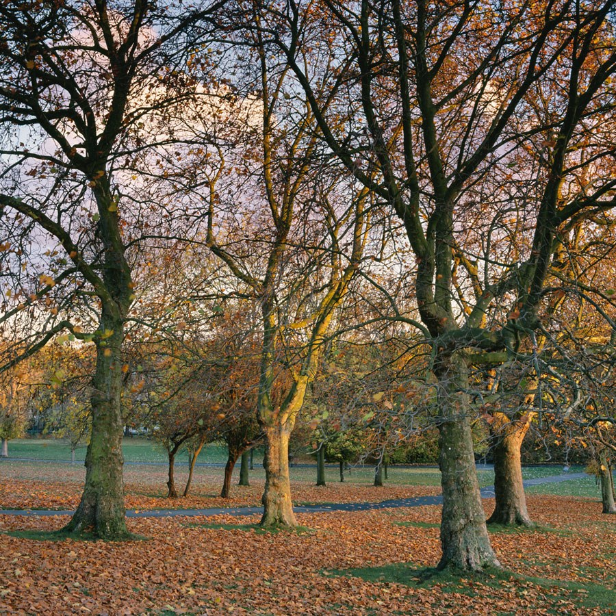 "Autumn Trees and Path to Brockwell Hall, 2009. Framed Print, 14.5"" sq in 50cm sq black aluminium frame. £125"
