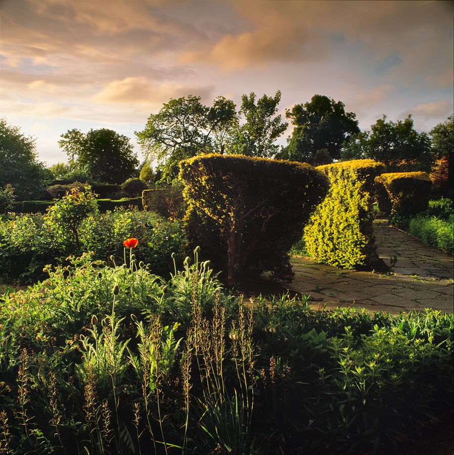 "Evening Shower in the Walled Garden II, 2009. Framed Print, 14.5"" sq in 50cm sq black aluminium frame. £125"