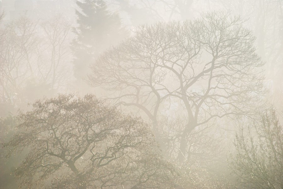 "Misty Treescape, 2008. Mounted Print, 10x15"" in 40x50cm mount, signed and titled. £37.50"