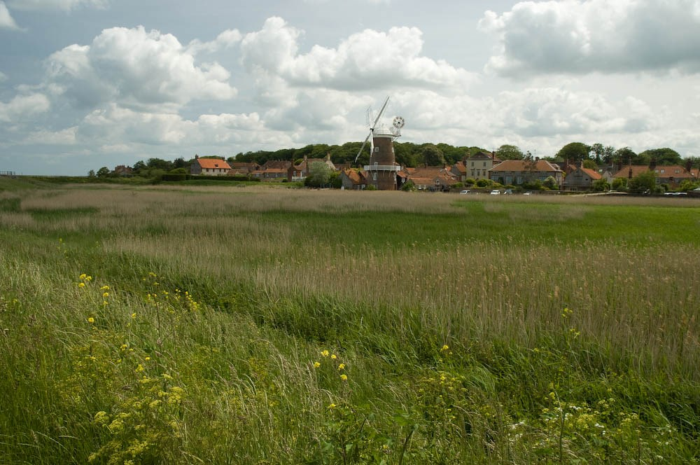 Wayside Flowers and Cley Windmill, 2013