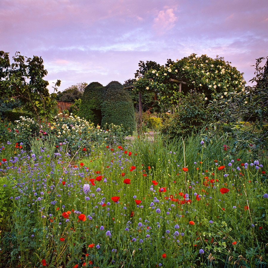 "Summer in the Walled Garden, 2010. Mounted Print, 9"" sq in 30cm sq mount, signed and titled. £37.50"