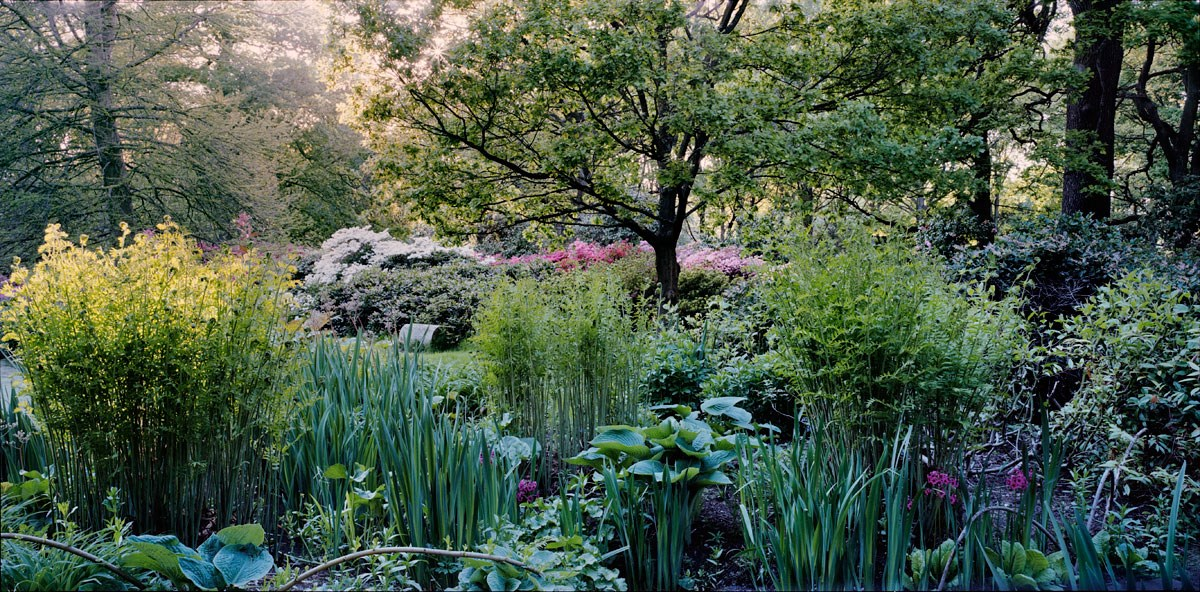 Last Rays in the Bog Garden, 2013. (Isabella Plantation)
