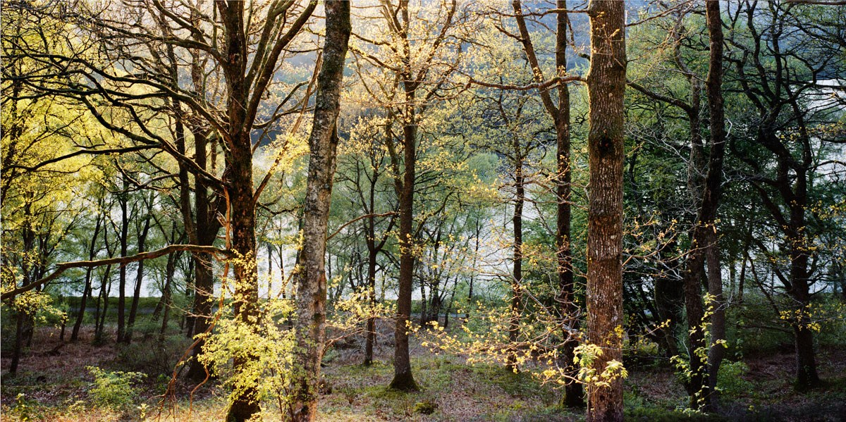 Yellow and Blue Woods, Garreg Ddu, 2013. Print Status: printed. To order a print please contact info@maxarush.com