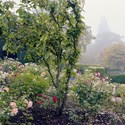 Path to the Fountain with September Roses, 2013. To order a print please contact info@maxarush.com