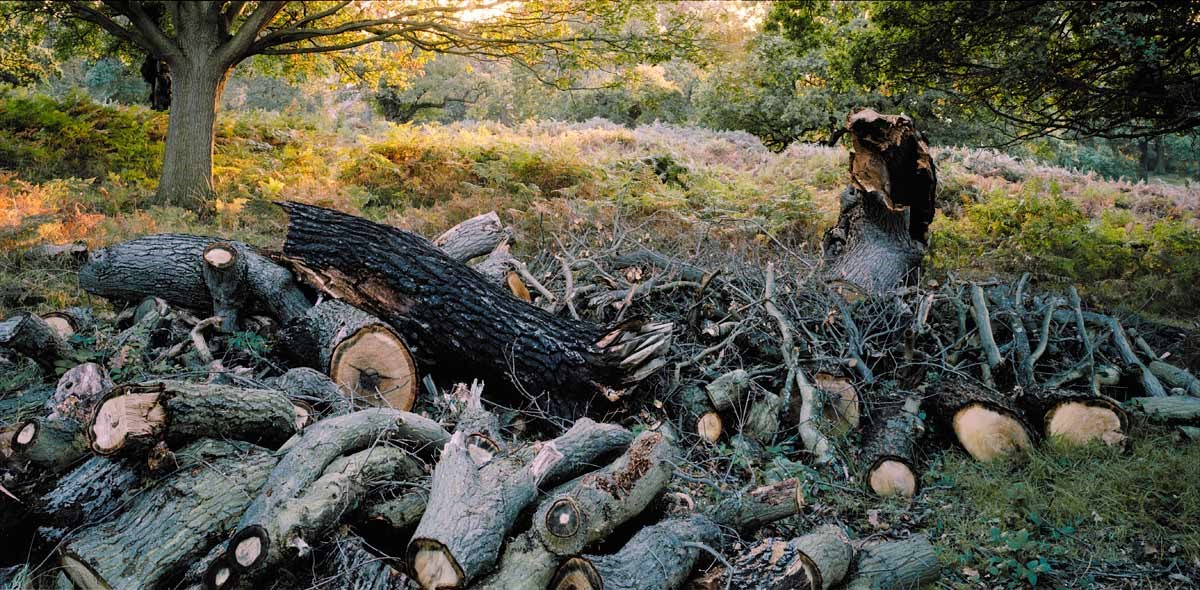 Log Pile, near Ham Dip, 2013. To order a print please contact info@maxarush.com