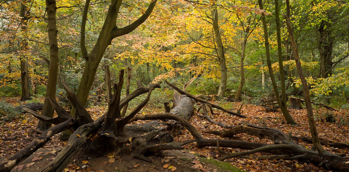 Branches and Boughs, The English Woodland