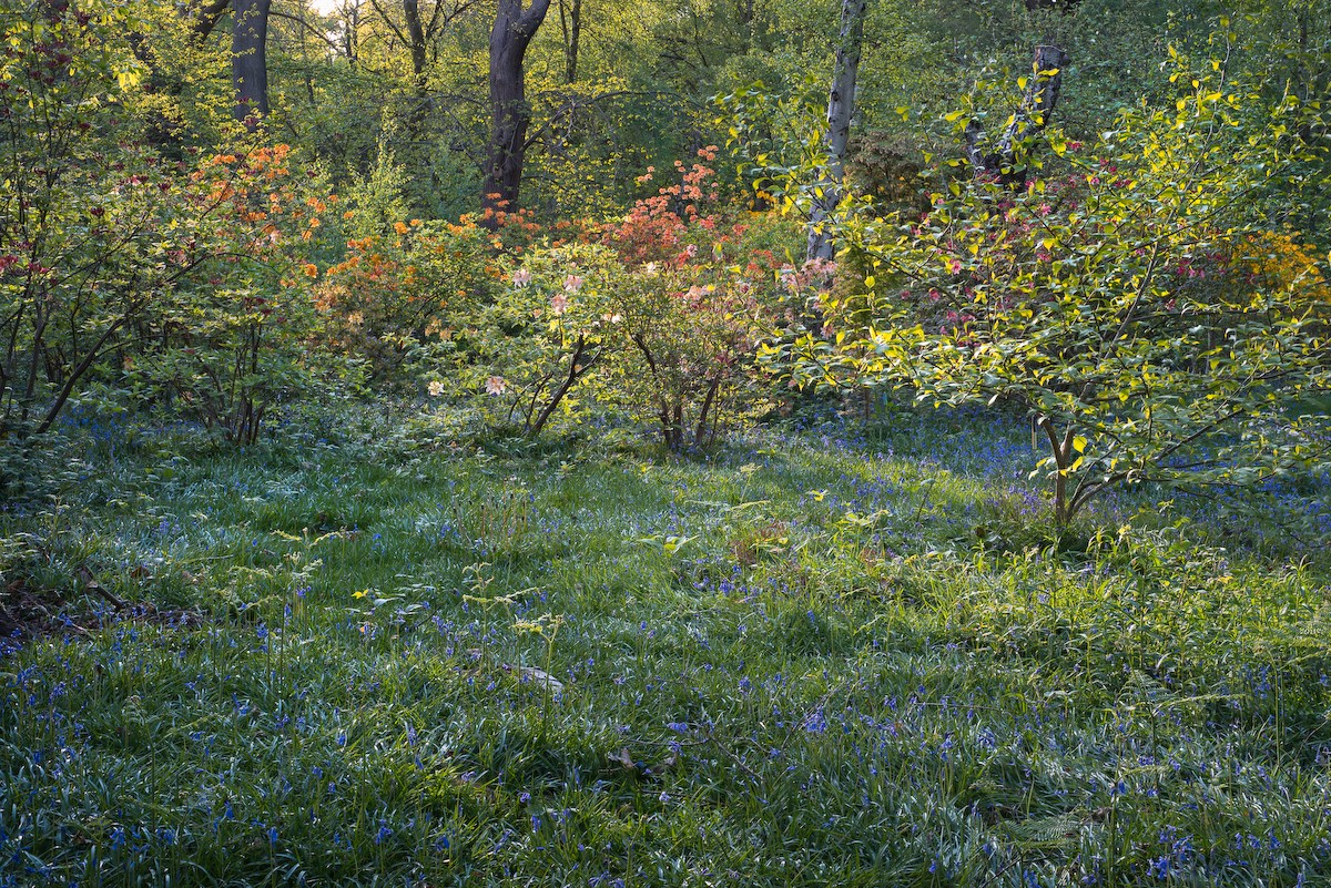 Evening Colours, Old Nursery Glade