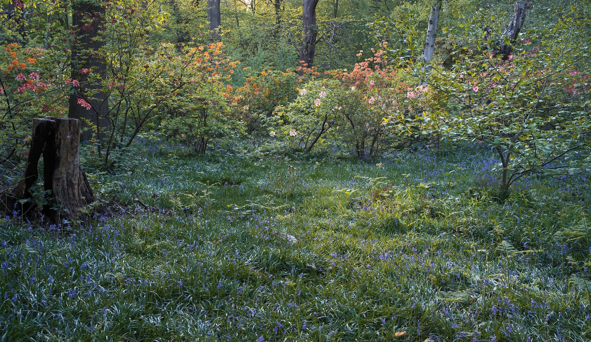 Old Nursery Glade, Late Spring