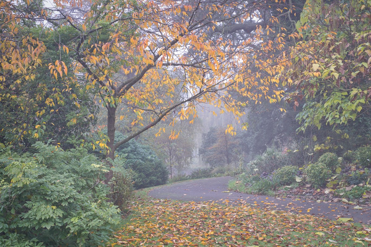 Winding Path in Fog, Queen Mary's Gardens