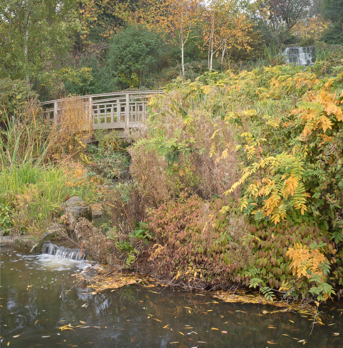 Bridge and Floating Leaves, The Japanese Garden