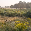The Heart of Richmond Park, near Queen's Ride, August 2016. To order a print please contact info@maxarush.com