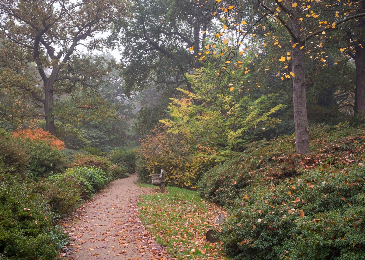Autumn Trail with Liriodendron
