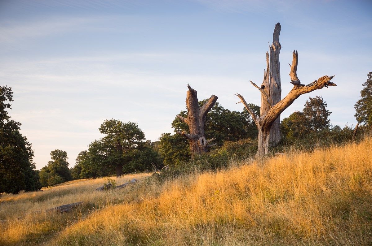 Monuments in the Meadow, Richmond Park, 2016