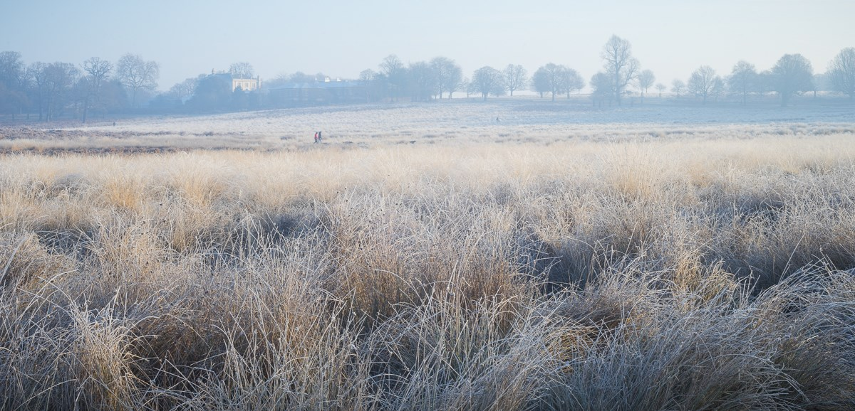 Frosted Rushes with View to White Lodge, 2016. To order a print please contact info@maxarush.com