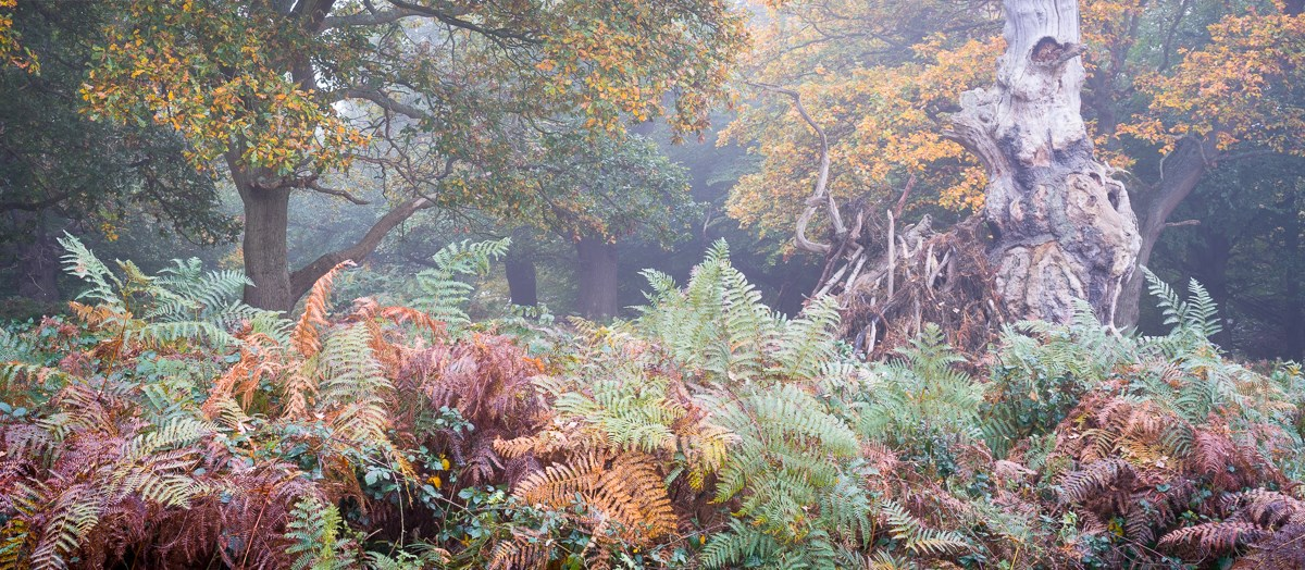 Autumn Bracken and Monolith in Mist, 2016. To order a print please contact info@maxarush.com