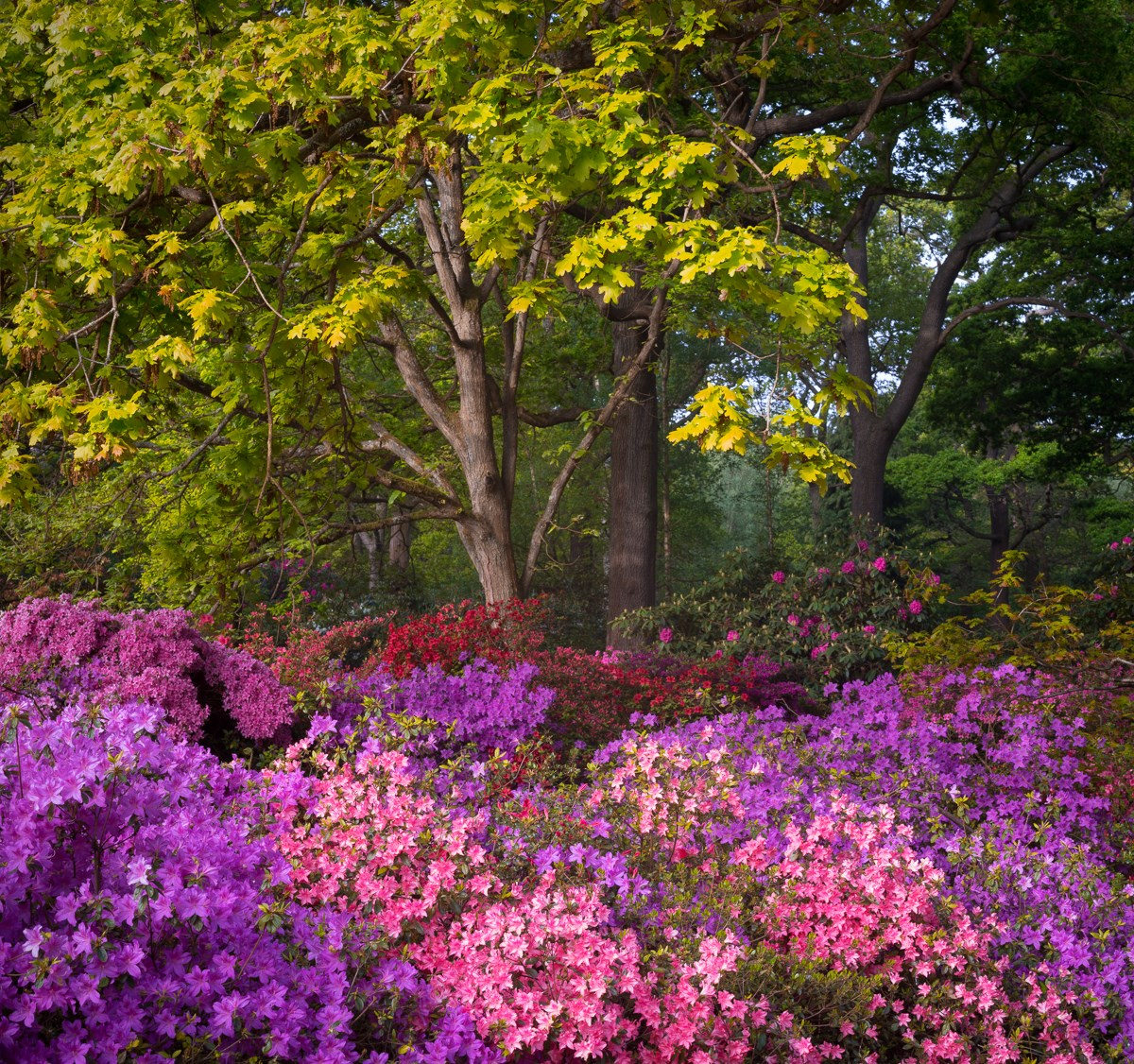 Polychromatic Forest, Isabella Plantation, Richmond Park, May 2017