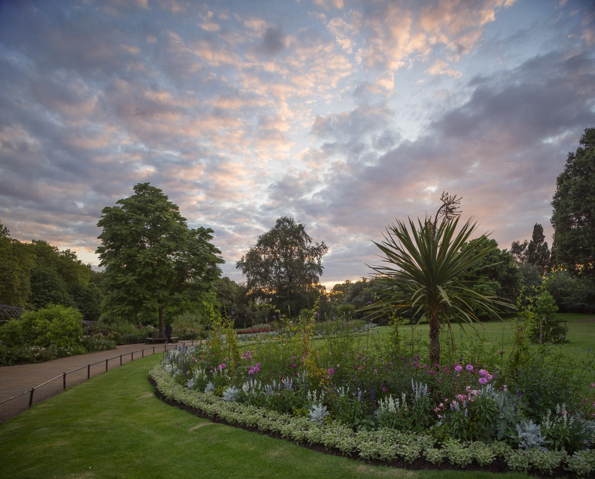 Cordyline Sunset, The Rose Garden, Hyde Park, 2016