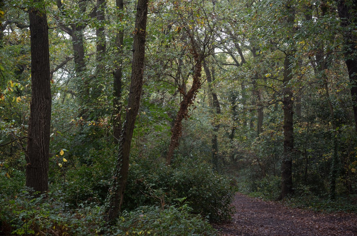 October Drizzle, Path from Grange Lane, October 2017
