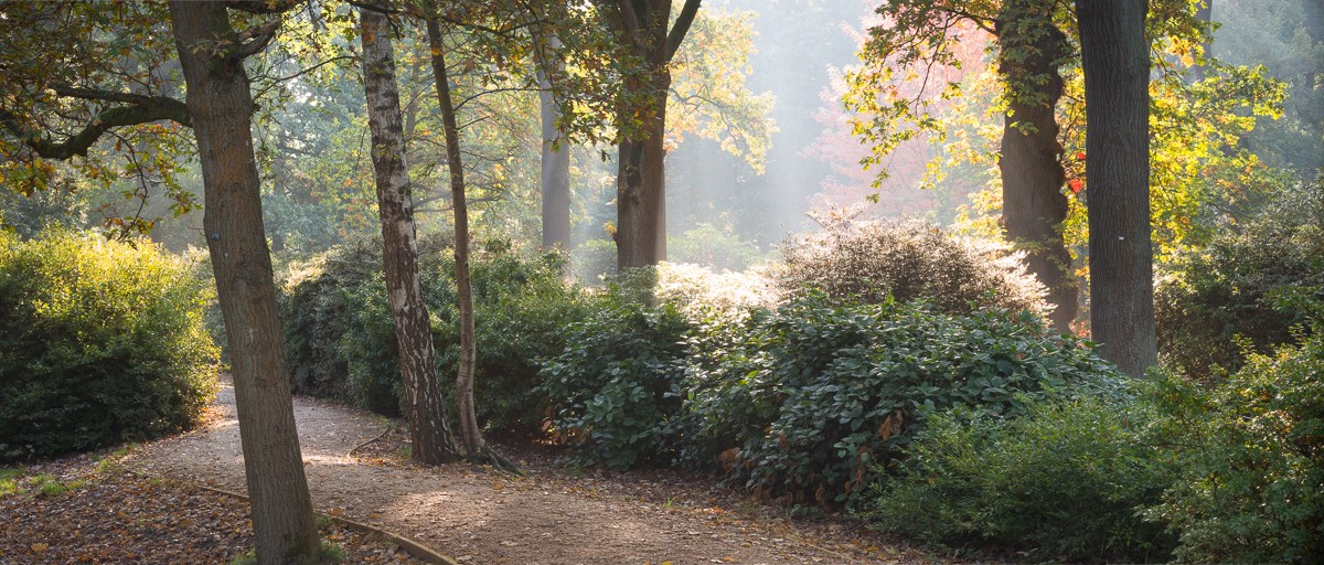 October Sun in Morning Mist, Isabella Plantation, 2016