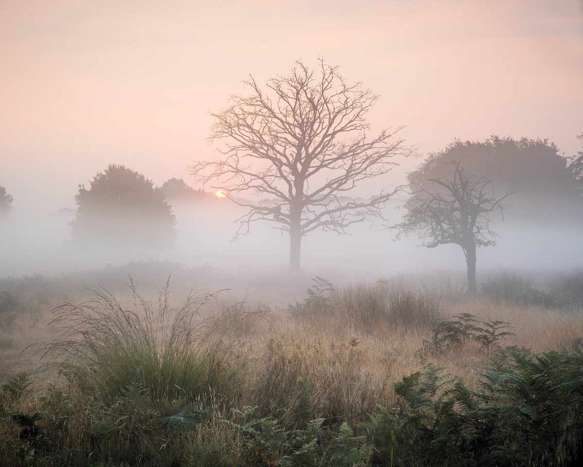 Grassland Sunrise, Richmond Park, August 2016.