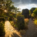 Stone Paths in Light and Shade, August 2020