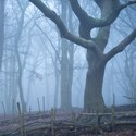 Winter in the Woods. Streatham Common